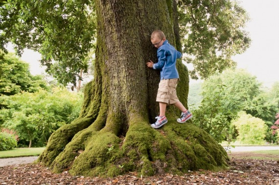 boy on tree
